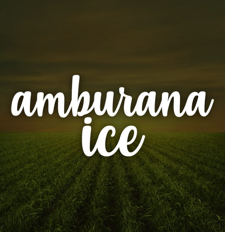 Amburana Ice
